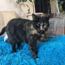 Кошечка Кыся, в Краснодаре