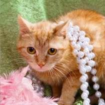 Кошка Ириска – удивительно умная золотая девочка в дар, в Москве