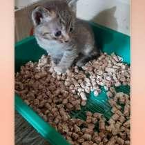 Ищем дом котятам, в Нижнем Новгороде