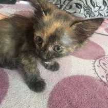 Котёнок девочка, в г.Запорожье