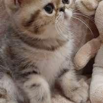 Экзоты экзотические котята, в г.Гомель