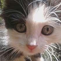 Отдадим котят в добрые руки, в г.Бишкек