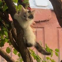 Котята в добрые руки, в Черкесске