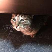 Кошка Маша, в Краснодаре