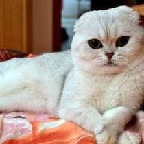 Коты на вязку, в Костроме