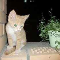 Котенок в добрые руки, в Алексине
