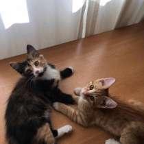 Котята Тулуз и Мари ищут дом и хозяев, в Москве