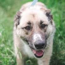 Счастье по имени Алиса! Собака для души в поиске семьи!, в Москве
