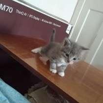 Котята даром, в Архангельске