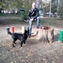Выгул собак, в Екатеринбурге