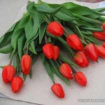 Тюльпан на букет, в Великих Луках