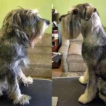 Стрижка собак, тримминг, стриппинг, в Конаково