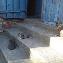 Котята, в Калининграде