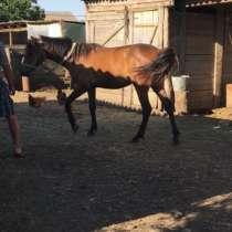 Продам лошадь (кобылку), в Ставрополе