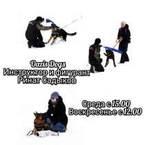 Дрессировка собак в Тюмени, в Тюмени