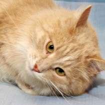 Застенчивый котик по имени Виски ищет дом, в Москве