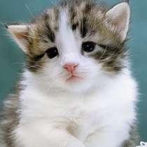 Ищу котёнка, в г.Тбилиси