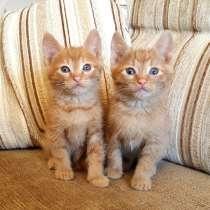Рыжие малыши котята 1,5 мес в добрые руки, в Москве