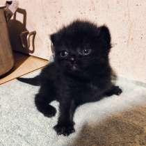 Котёнок в добрые руки, в Нижнем Новгороде