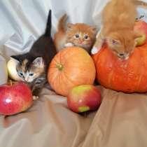 Котята от кошки - мышеловки, в Чехове