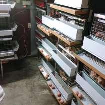 Клетки для содержания родительского стада кур, в г.Минск