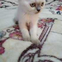 Продаются котята, в г.Кагул