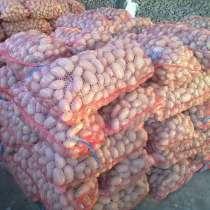 Картофель сетками, в Кемерове