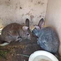 Кролики, в Москве