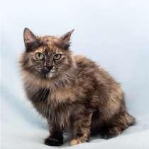 Красивая, трёхцветная, пушистая кошка Маша в добрые руки, в Москве