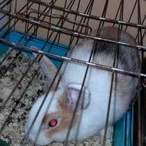 Отдам в добрые руки кролика, в Белорецке