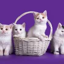 Предлагаем к продаже высокопородных котят, в Нижнем Новгороде