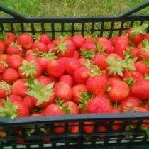 Продам клубнику, в Минусинске