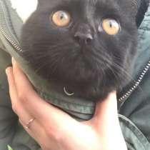 Кошка, в Перми