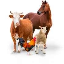 Закупаем сельхоз животных, в Новосибирске