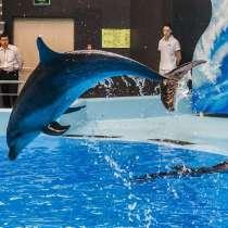 Вип билеты в дельфинарий, в Новосибирске