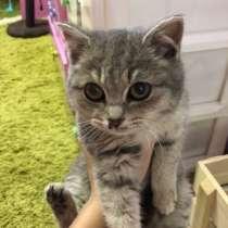 Отдам котёнка в добрые руки, в Саратове