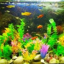 Аквариум с рыбками, в Джанкое