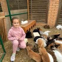 Кролики зоопарк. Контактный зоопарк, в Москве