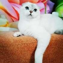 Котик в любимцы, в Миассе
