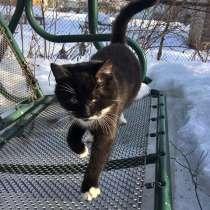 Ласковый и игривый молодой котик Тайсон в дар, в Москве