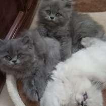 Продаются котята, в г.Акко