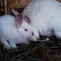 Продажа крольчат, в Омске