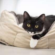 Озорной котик Джимми ищет дом, в Москве