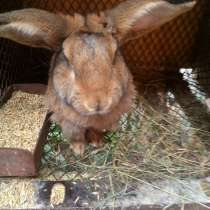 Кролики, в Костерёво