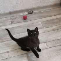 Котенок ищет дом!, в г.Гродно