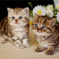 Хочу котёнка, кто дарит я приму любой породы и непородистого, в г.Тбилиси