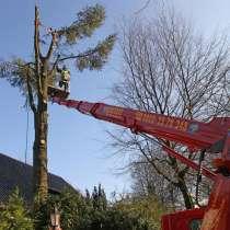 Обрезка и удаление (валка) деревьев, в г.Минск