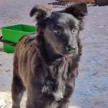 Прекрасный щенок Блэк ищет дом!, в Пушкино