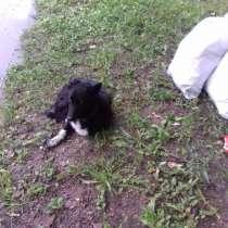 Собачка ищет хозяина, в Переславле-Залесском