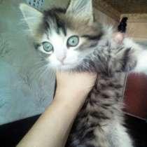 Котята в добрые руки, в г.Лисичанск